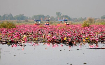 Han Kumphawapi (Red Lotus Lake)
